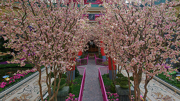 bellagio entertainment conservatory japanese spring pink walkway.jpg.image.1920.1080.high